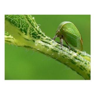 Postal de Treehopper
