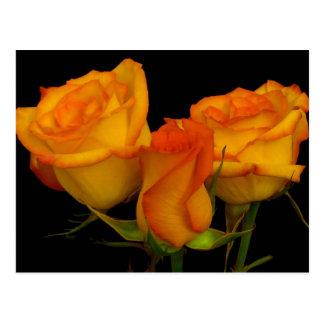 Postal de tres rosas de Firery