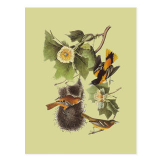 Postal de Troupial Oriole de los pájaros de Audubo