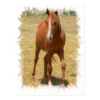 Postal de un año del caballo de la castaña