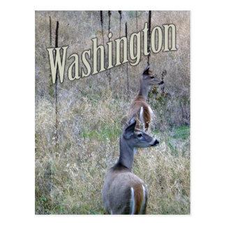 Postal de Washington, dos ciervos de la cola