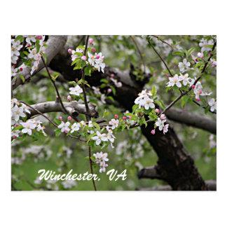 Postal de Winchester VA de 09 flores de Apple