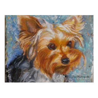 Postal de Yorkshire Terrier