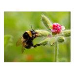 Postal del abejorro