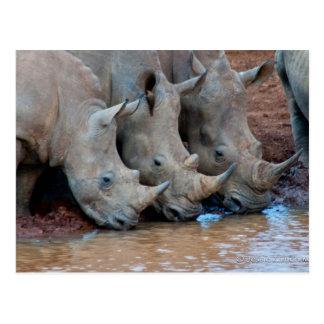 Postal del agua potable de los Rhinos