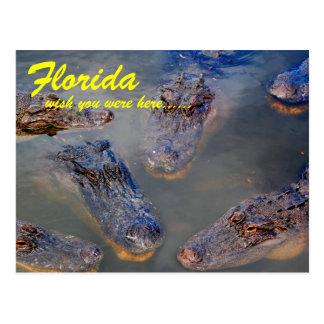 Postal del agujero de natación de la Florida