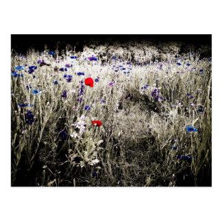 Postal del aislamiento del color del Wildflower