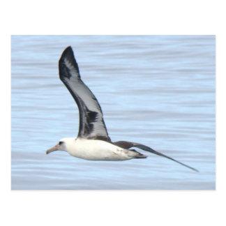 Postal del albatros de Laysan