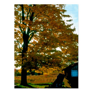 Postal del amarillo de la gloria del otoño