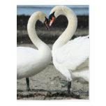 Postal del amor del cisne