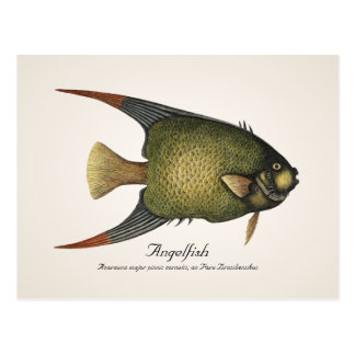 Postal del Angelfish - estilo II
