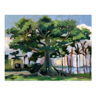 Postal del árbol de Kapok