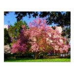 Postal del árbol de la magnolia