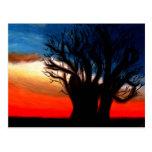 Postal del árbol de Pari Chumroo Baobob