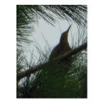 Postal del árbol de pinos del pájaro de la agua