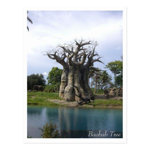 Postal del árbol del baobab