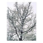 Postal del árbol del invierno