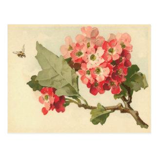Postal del árbol floreciente del vintage