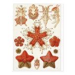 Postal del arte de Ernst Haeckel: Asteridea
