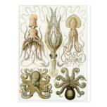 Postal del arte de Ernst Haeckel: Gamochonia