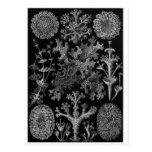 Postal del arte de Ernst Haeckel: Lichenes