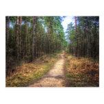 Postal del arte de HDR de la trayectoria de bosque
