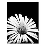 Postal del arte de la flor del Doronicum (blanco y