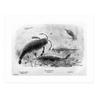 postal del arte de los Mar-escorpiones