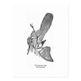 Postal del arte del Archaeopteryx
