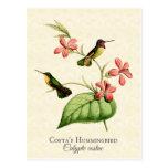 Postal del arte del colibrí de la costa