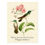 Postal del arte del colibrí de la gema de la monta