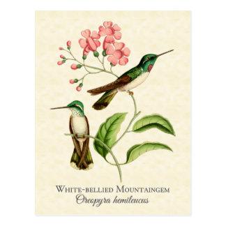 Postal del arte del colibrí de la gema de la