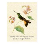Postal del arte del colibrí de Starfrontlet