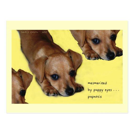 Postal del arte del Haiku de Pupnosis - postal cob