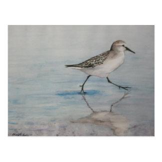 Postal del arte del pájaro del gaitero de la arena