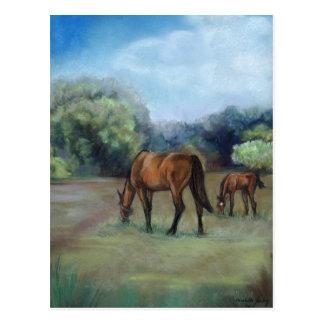 """""""Postal del arte del pasto del caballo"""" Postal"""