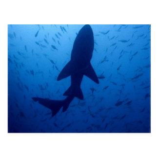 Postal del ataque del tiburón