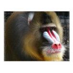Postal del babuino
