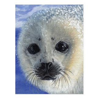 Postal del bebé de cría de foca de la inocencia