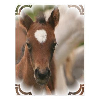 Postal del bebé del caballo