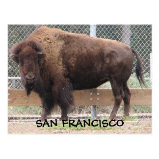 ¡Postal del bisonte de San Francisco! Postales