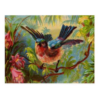 Postal del Bluebird del verano