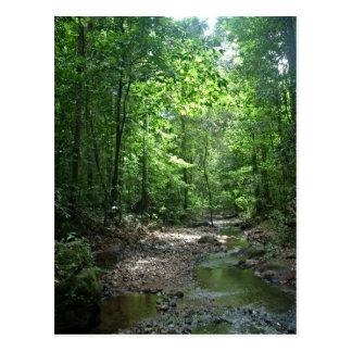 Postal del bosque de Suriname