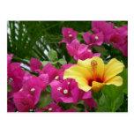 Postal del Bougainvillea y del hibisco
