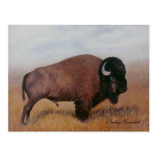 Postal del búfalo