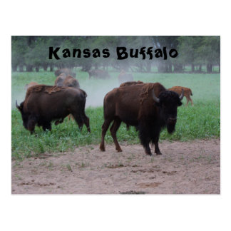 POSTAL del búfalo de Kansas