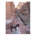 Postal del burro del Petra