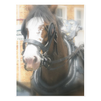 Postal del caballo de Clydesdale Brown