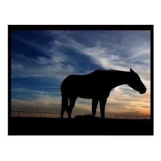 Postal del caballo de la puesta del sol