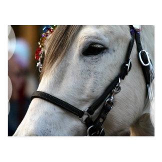 Postal del caballo de Lippizan